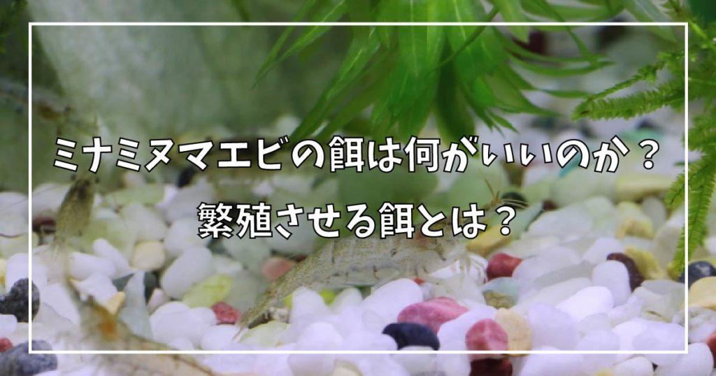 ミナミヌマエビの餌は何がいいのか?繁殖させる餌とは?