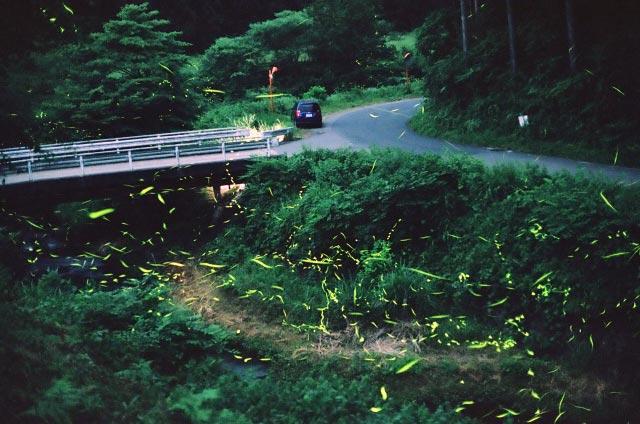 熊本県ホタル
